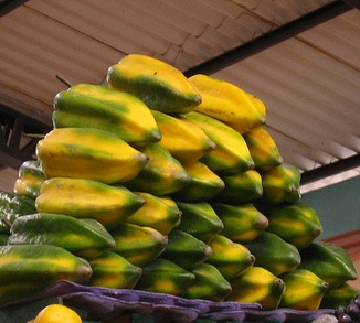 Piante da frutto tropicali e subtropicali carica pentagona for Vendita piante da frutto tropicali