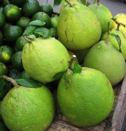 Piante da frutto tropicali e subtropicali citrus grandis for Vendita piante da frutto tropicali