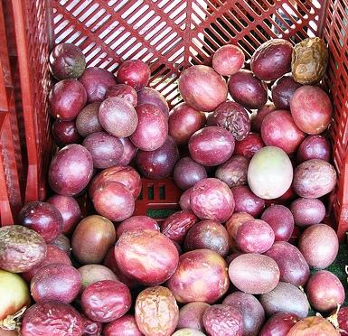 Piante da frutto tropicali e subtropicali passiflora edulis for Vendita piante esotiche