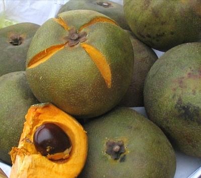 Piante da frutto tropicali e subtropicali: Lucuma obovata
