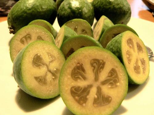 Piante da frutto tropicali e subtropicali feijoa sellowiana for Vendita piante da frutto tropicali