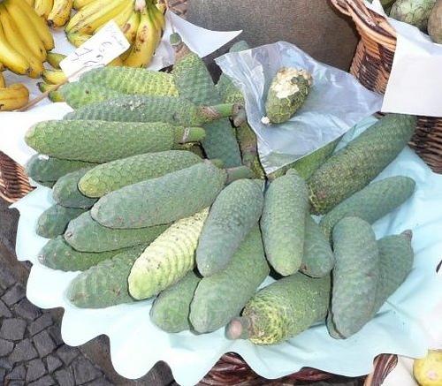 Piante da frutto tropicali e subtropicali monstera deliciosa for Piante da frutto ornamentali
