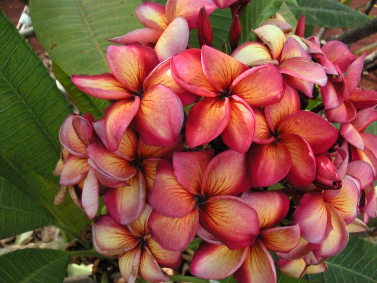 Piante da frutto e ornamentali tropicali e subtropicali for Vendita piante esotiche