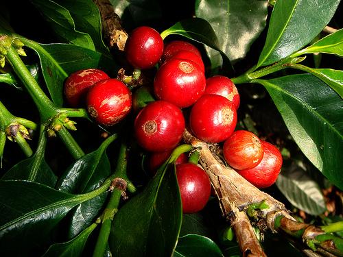 piante da frutto e ornamentali tropicali e subtropicali